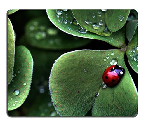 Ladybug Sitting Clover green three leaf insect water dew Mouse Pads Customized Made to Order Support Ready 9 7/8 Inch (250mm) X 7 7/8 Inch (200mm) X 1/16 Inch (2mm) - Pad Ladybug Mouse