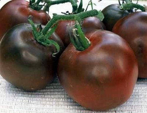 tomato seeds siberia - 4