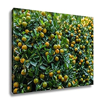 Amazon Ashley Canvas Tet Kumquat Trees The Symbols Of Lunar New