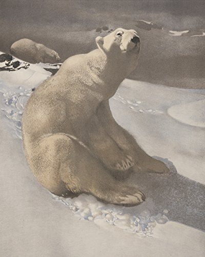 (Photo Print 16x20: A Polar Bear Seated On Snow And Another Polar Bear Walking...)