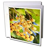 3dRose TDSwhite – Farm and Food - Food Fresh Longans - 6 Greeting Cards with Envelopes (gc_285143_1)