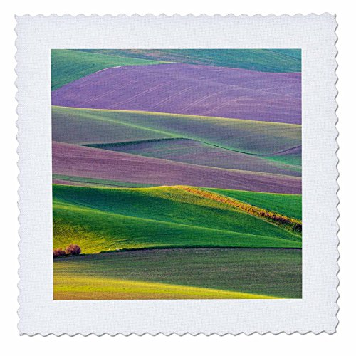 Palouse Hills - 3dRose Danita Delimont - Agriculture - Washington, Palouse, Spring Rolling Hills purple and green fields. - 10x10 inch quilt square (qs_279753_1)