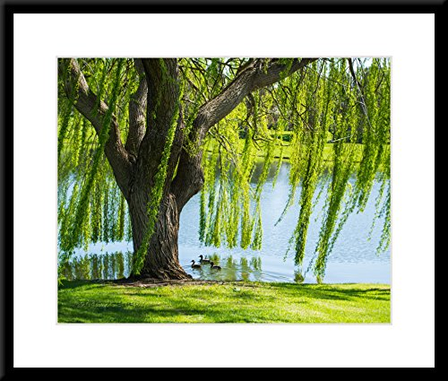 Willow Tree In Spring Breeze - Large Framed Wall Art