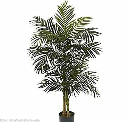 Amazon seeds areca palm dypsis soft willow like green leaves seeds areca palm dypsis soft willow like green leaves houseplant gardening yellow flowers easy to grow mightylinksfo