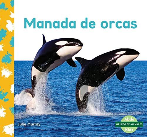 Manada de Orcas (Orca Whale Pod)