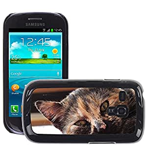 Hot Style Cell Phone PC Hard Case Cover // M00109545 Cat Domestic Cat a Animal Eye // Samsung Galaxy S3 MINI i8190