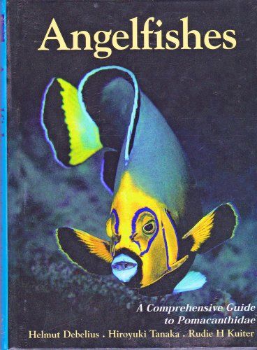 Angelfishes (Marine Angel Fish)