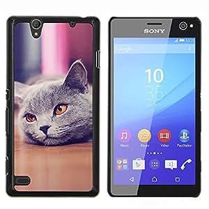 """Be-Star Único Patrón Plástico Duro Fundas Cover Cubre Hard Case Cover Para Sony Xperia C4 E5303 E5306 E5353 ( Lindo Hermoso Gato británico de Shorthair"""" )"""