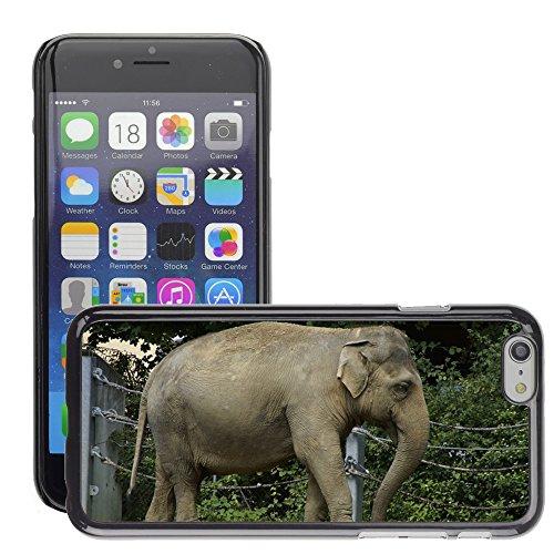 """Bild Hart Handy Schwarz Schutz Case Cover Schale Etui // M00135485 Elefant Indischer Elefant Tier // Apple iPhone 6 PLUS 5.5"""""""