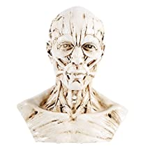 Resin Human Model Anatomy Skull Head Muscle Bone for Artist Drawing Sketch Medical Study(Antique White)