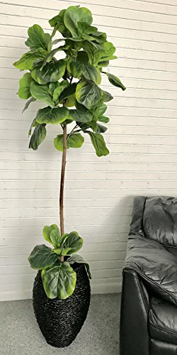 LCG Floral 17TFP36 Fig Tree in a Basket Silk Plant, Green