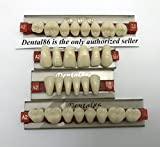 Dental Acrylic Resin Teeth Denture For Halloween Horror Prop