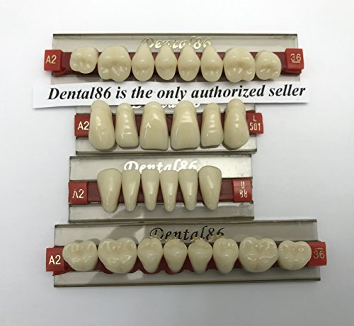 Dental Acrylic Resin Teeth Denture For Halloween Horror Prop by -