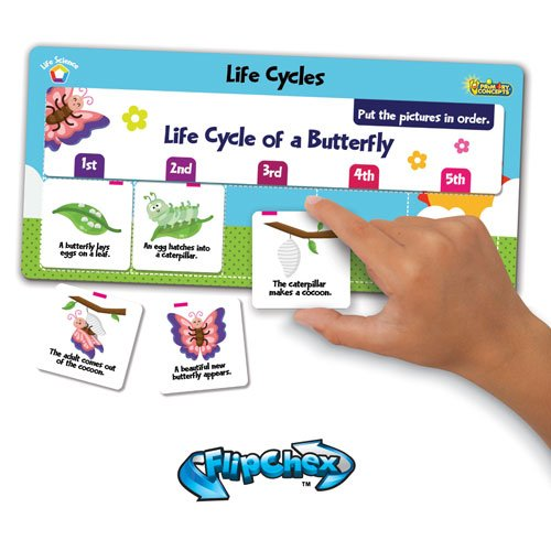 life cycle preschool - 5