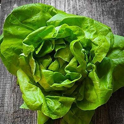 MABES WAREHOUSE Buttercrunch Lettuce 200 Seeds - Butterhead Lettuce, Bibb Lettuce Seeds, Lactuca Sativa Seeds, Non GMO Lettuce Seeds for Planting, Bulk Vegetable Seeds for Planting Home Garden : Garden & Outdoor