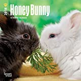 Honey Bunny 2018 7 x 7 Inch Monthly Mini Wall Calendar, Domestic Small Cute Animals