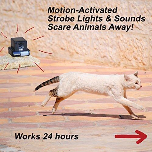 PREDATORGUARD PestAway Ultrasonic Outdoor Animal Repellent