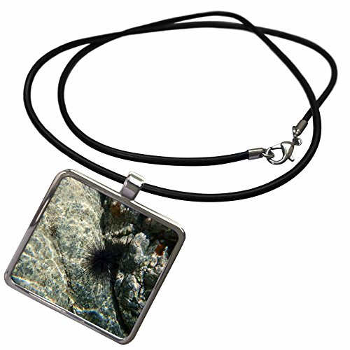 3dRose BrooklynMeMe Fish - Sea Urchin - Necklace With Rectangle Pendant (ncl_200903_1)