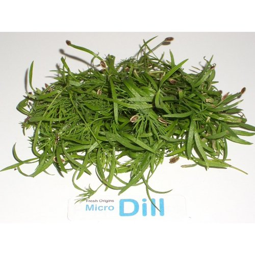 Micro Greens - Dill - 4 x 4 oz by For The Gourmet