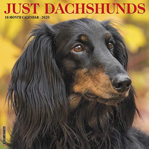 Just Dachshunds 2020 Wall Calendar (Dog Breed Calendar)