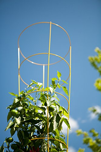Panacea Products 89756 Heavy Duty Tomato Cage and Plant Support, 54 by 16-Inch, Yellow by Panacea Products (Image #1)