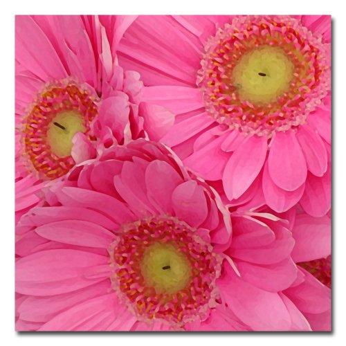Pink Gerber Daisies by Amy Vangsgard, 18x18-Inch Canvas Wall Art (Gerber Daisy Decor)