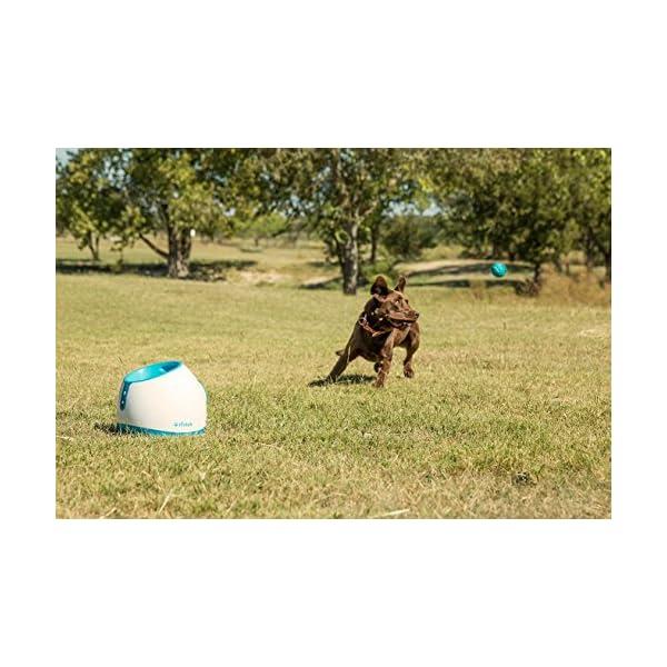 Brinquedos Interativos para Cães