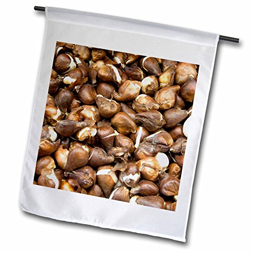 danita-delimont-markets-netherlands-amsterdam-market-tulip-bulbs-eu20-cmi0108-cindy-miller-hopkins-f