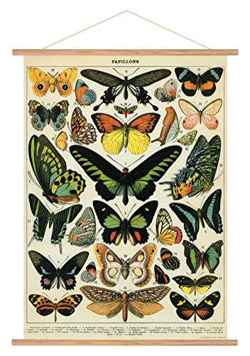 Butterfly Large Poster - Cavallini Papers & Co. Cavallini Vintage Butterflies Hanging Poster