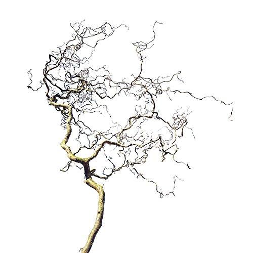 Ramo decorativo DESCENA Cavatappi (Mind. 100 cm di lunghezza; 40 cm di larghezza) decorazione primaverile naturale cavatappi a forma di stella di Pasqua con rami sospesi, accessorio per uccelli Naturast per gabbia per uccelli Dekozweig