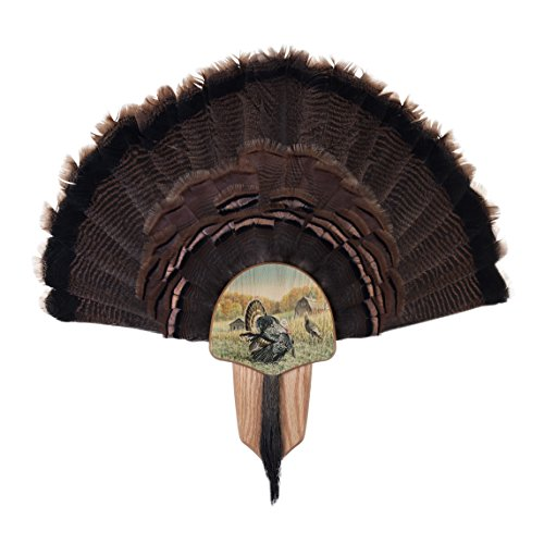 Walnut Hollow Country Turkey Fan Mount & Display Kit, Oak with ON Display ()