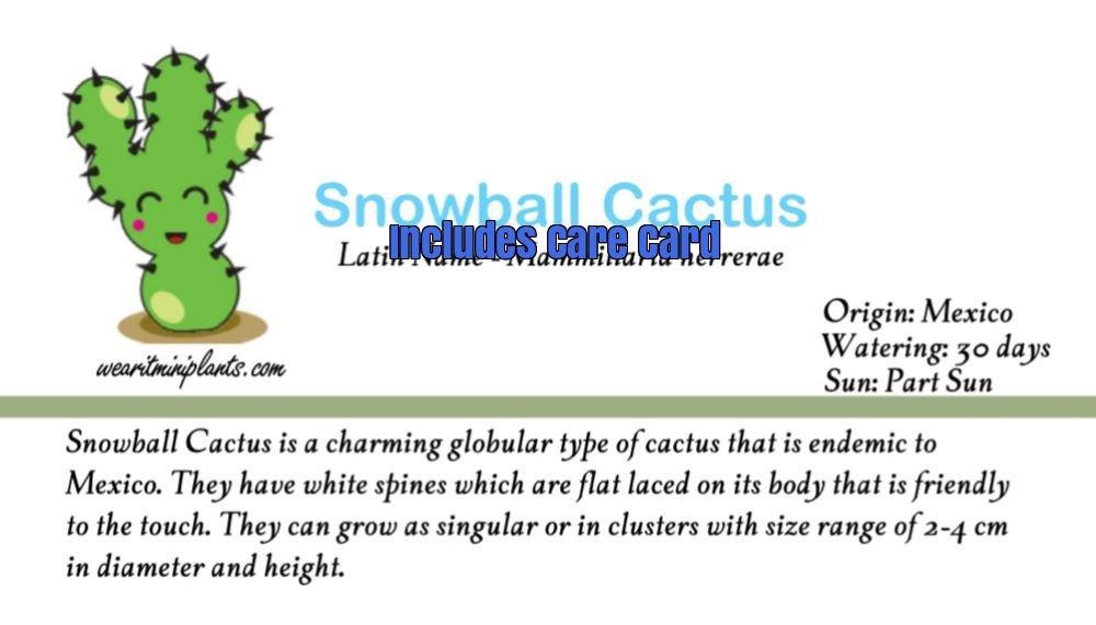 Amazon.com: Bola de nieve Cactus terrario Llavero Accesorio ...