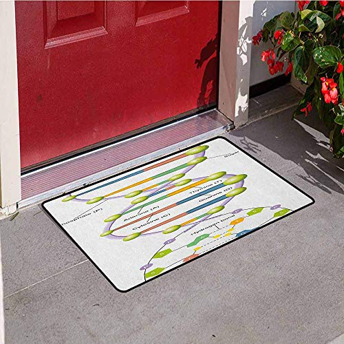 Gloria Johnson Educational Inlet Outdoor Door mat Colorful Structure of DNA Genetic Code Amino Acids Nucleotides Scientific Study Catch dust Snow and mud W15.7 x L23.6 Inch - Dust Dna