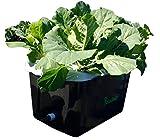 FarmDaddy Self Watering Garden Container (Black)