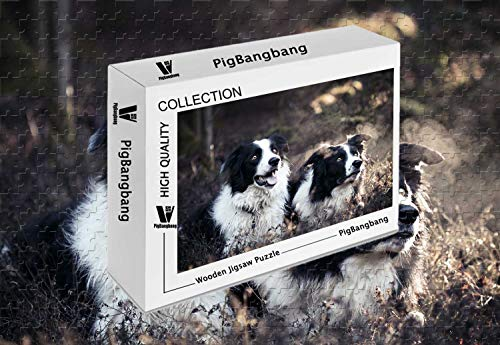PigBangbang,Stained Art Kids Adult Basswood - Border Collies - 500 Piece Jigsaw Puzzle (20.6 X 15.1 -