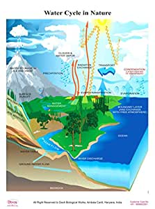 Amazon.com : Dbios Digitally Printed Water Cycle In Nature