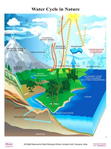 Dbios Digitally Printed Water Cycle In Nature Laminated Poster Educational Wall Charts (Life Cycle Poster Laminated)