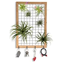 Lisuu Wall Hanging Airplant Tillandsia Air Plant Holder