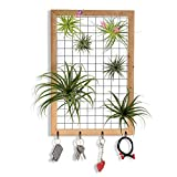 Air Plant Frame Wall Hanging Airplant Tillandsia Air Plant Holder Art Home Decor(Not Included Plants)