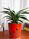Rolling Nature Air Purifying Spider Plant in Orange Bucket Aroez Ceramic Pot