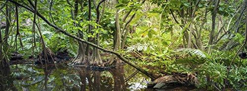 Carolina Custom Cages Reptile Habitat Background; Rain Forest Swamp, for 24Lx18Wx24H Terrarium, 3-Sided -