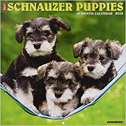 Just Schnauzer Puppies 2019 Calendar