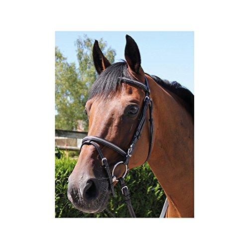 Bridon Tempio – brio- Nero Pony