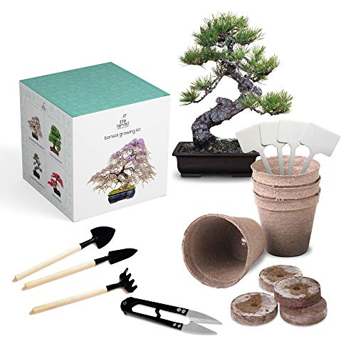 Bonsai Tree Kit + Tools – Includes Soil, pots, 4 Types of Bonsai Seeds, Mini Shovel, Mini rake, and Bonsai Scissors. A DIY kit That Makes a Great Unique Gift idea! from Little Harvest