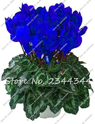 Yard Garden Outdoor Living 100 Pcs Seeds Rare Flowers Bonsai Mini Rose Tree Plants Houseplants Perennial N Candiidonline Com