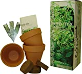 S.F. Imports GB-HERB/MIX 1 Grow Your Own Herb Kit