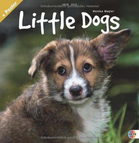 Little Dogs Broschurkalender 2013