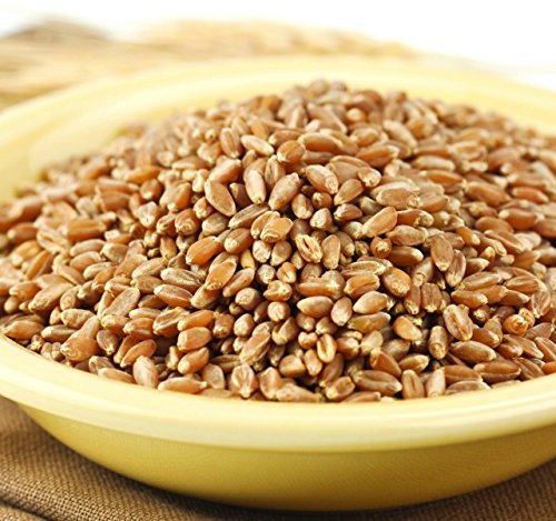 (Wheat Montana Bronze Chief Hard Red Spring Wheat Berries, 50 Lb. Bag)