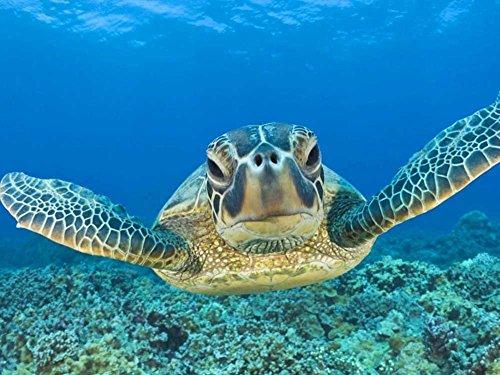 tslook-fashions-doormat-leatherback-sea-turtle-in-ocean-indoor-outdoor-front-welcome-door-mat30x18l-