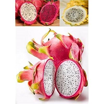 100 White Dragon Fruit Seeds Cactus Fruit : Garden & Outdoor